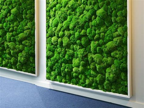 Moos Bild Selber Machen by Mooswand Selber Bauen Moss Wall Diy Solution From
