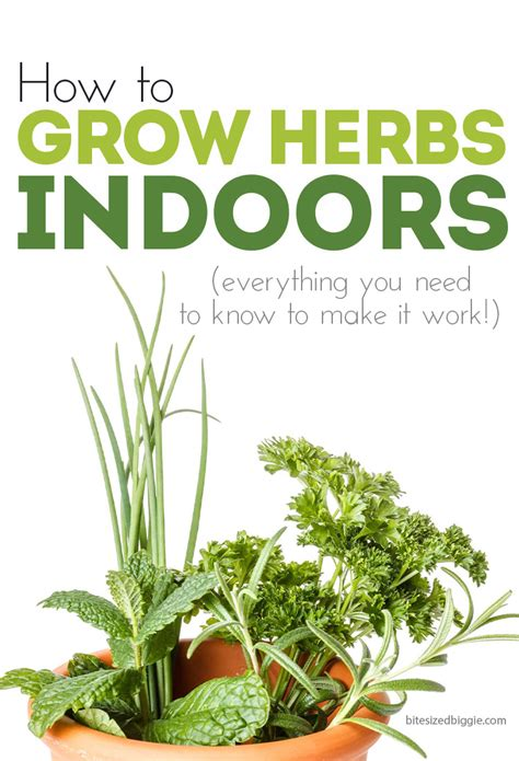 how to grow a herb garden how to grow herbs indoors