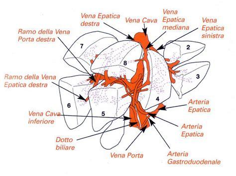 arteria mascellare interna immagini