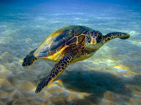 Tortle Air S sea turtle education outdoors