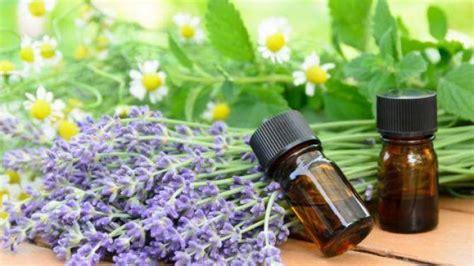 Minyak Esensial Lavender khawatir aroma bb bikin tewas orang 5 bahan alami ini