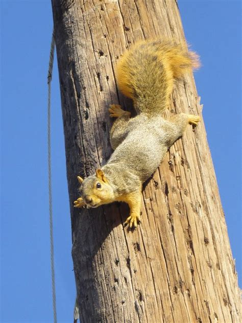 squirrel on a pole photograph by guy ricketts