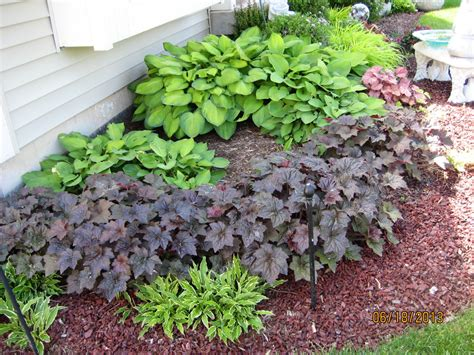 shade plants green thumb pinterest