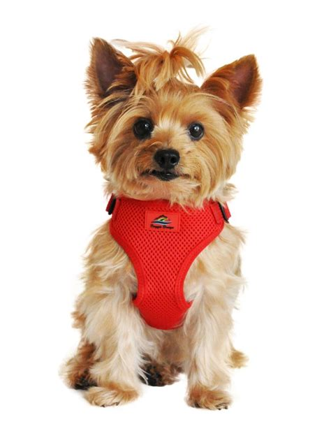 teacup yorkie harness wrap and snap choke free harness colors yorkie and the o jays