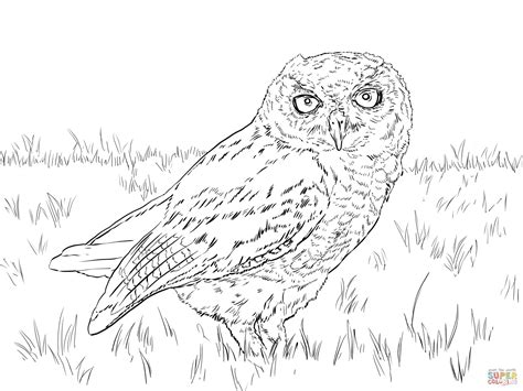 coloring page snowy owl snowy owl coloring pages