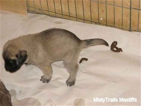 training dogs not to poop in the house misty method raising puppies at 3 to 3 5 weeks old time
