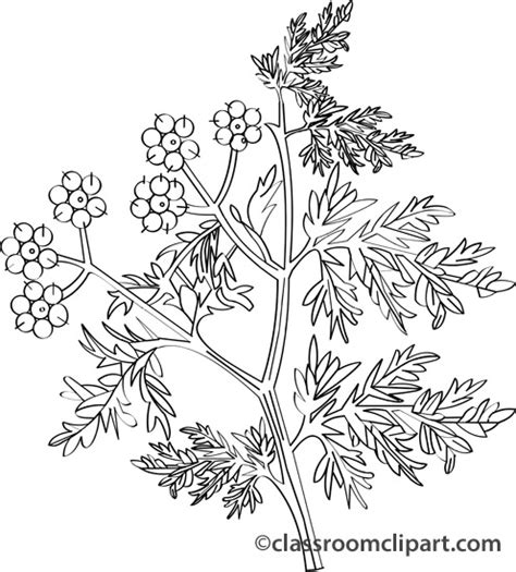 free herb plants coloring pages