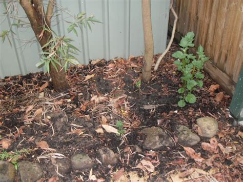Coffee Grounds For Gardening by Coffee Grounds In The Garden Ground To Ground