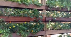 Vertical Garden Made Out Of Pallets Diy Vertical Garden Made Out Of Pallets And Woolen Mesh