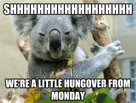 High Koala Meme - funny koala memes www imgkid com the image kid has it