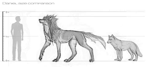 wolf size compared to wolf hybrid size comparison