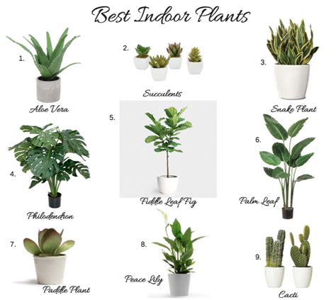Best Indoor House Plant Best Indoor Plants Myfavoriteheadache Com