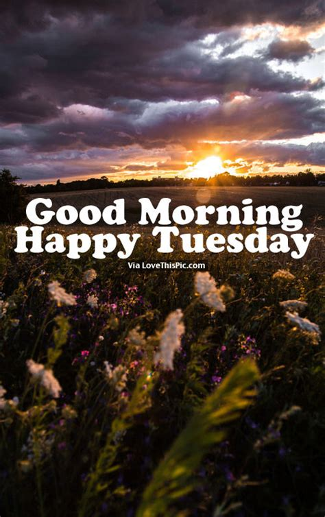 imagenes de good morning tuesday good morning happy tuesday pictures photos and images