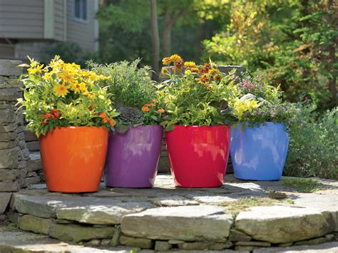 self watering edible flowers edible landscaping made easy with avis licht