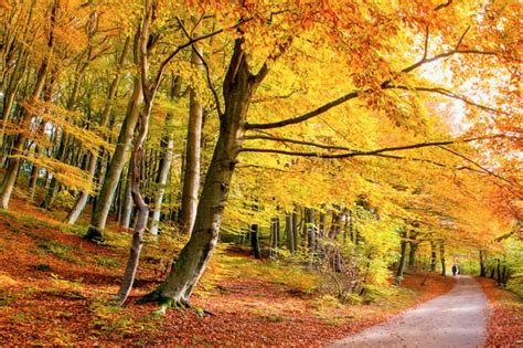 most amazing trees photos of the world s most beautiful trees reader s digest