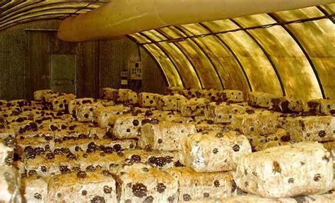 funghi coltivati in casa funghi e dintorni gli articoli
