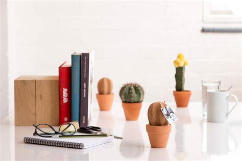 cork cactus desk tidy    brighton beautiful