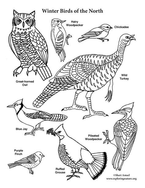 winter birds of the north coloring page