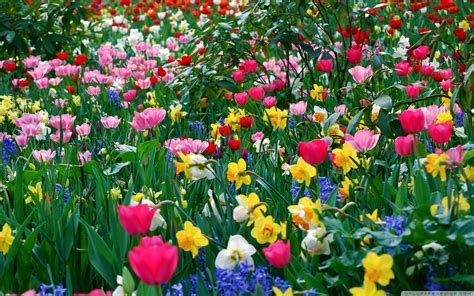 Spring Floral | spring flowers backgrounds desktop wallpaper cave