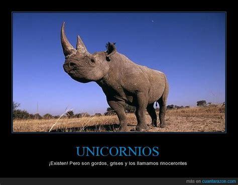 imágenes de unicornios verdaderos verdaderos unicornios bing images