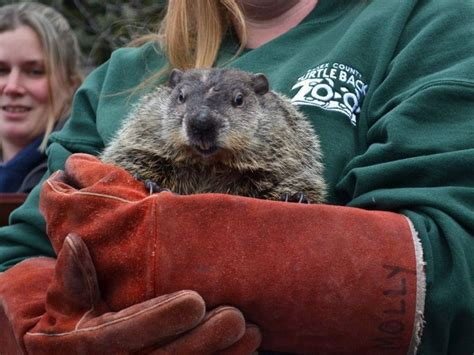 groundhog day turtle back zoo essex ed prepared for groundhog day 2017 at n j turtle