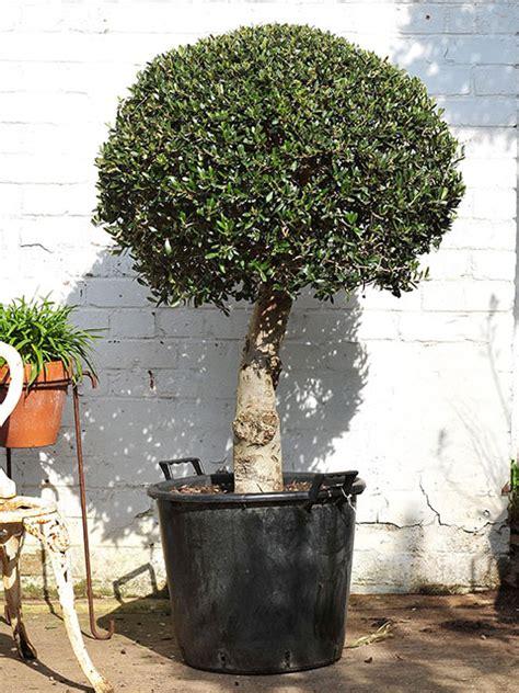 mature tree sale sex nude celeb