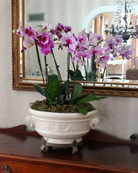 Orchids Pots Planters by Decorating With Orchids And A Great Trick For Growing Them