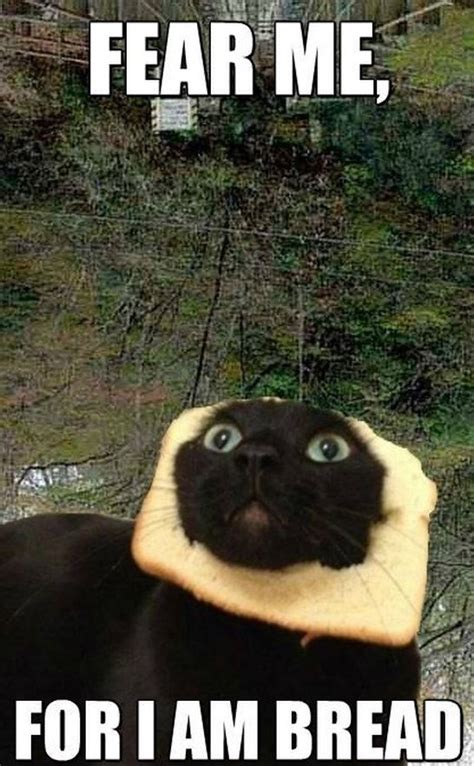 Bread Cat Meme - cat bread meme