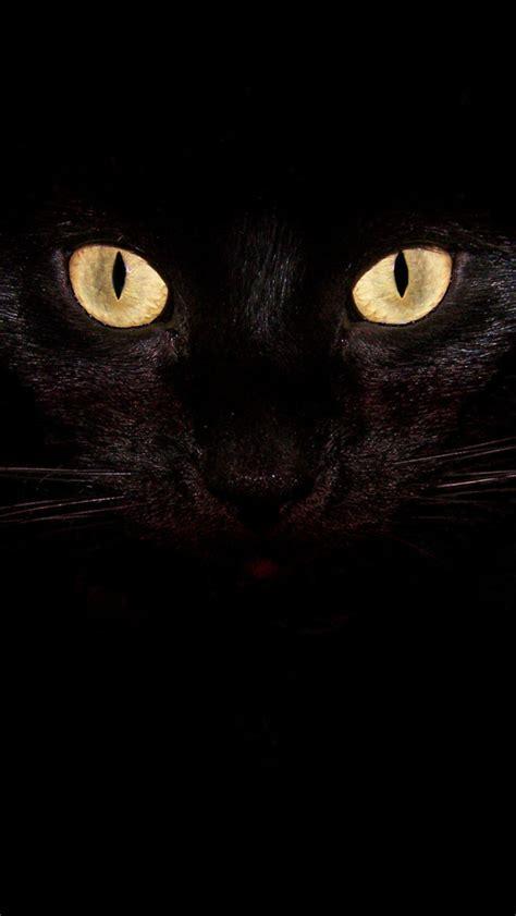 black cat wallpaper iphone eyes of light big black cat iphone 5 wallpapers top