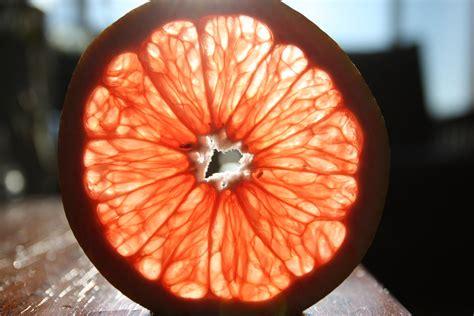 grapefruit slice  zen flickr
