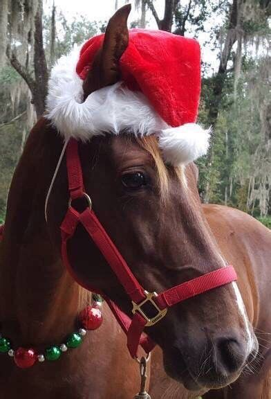 christmas decorating with horses 97 best images about horses on merry and white horses