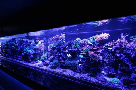 1300 Gallon Tank Suffered A Catastrophic Failure Orphek Blue Led Lights Aquarium