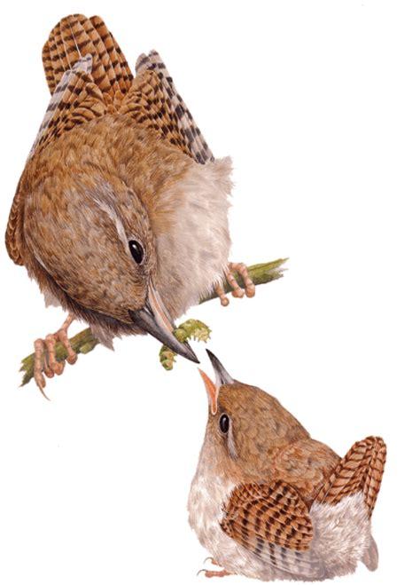 aves de espaa y aves de espa 241 a