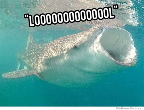Meme Shark - lol shark weknowmemes