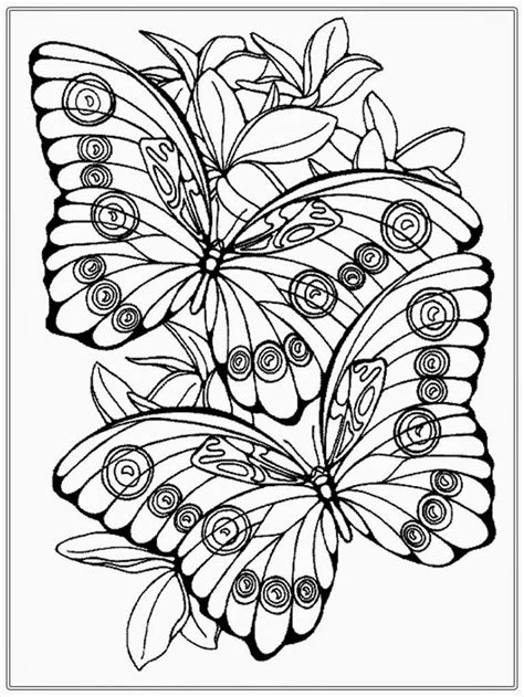 realistic butterfly coloring pages 17 best images about color pages on pinterest surf gel