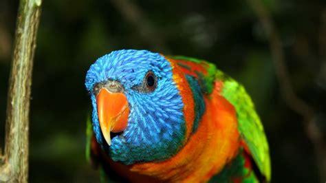 bird with colored beak wallpaper 1920x1080 parrot bird beak branch