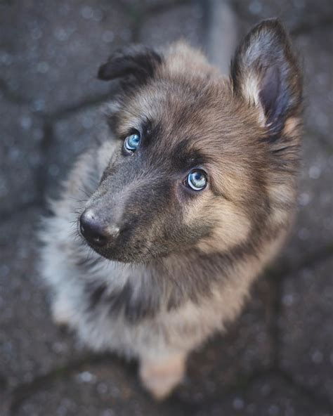 7 Cool Breeds Of Dogs by List Cutest Breeds In The World With Picture Do You