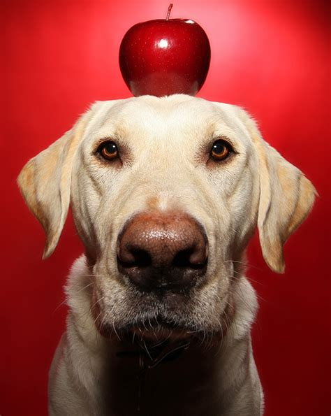 apples and dogs 12 fruits and veggies that your pup will go bananas for
