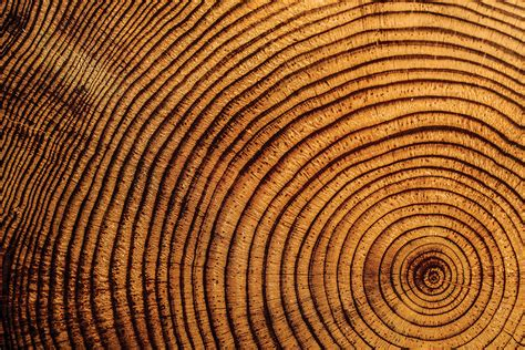 tree ring beautiful circles happening in our world right now