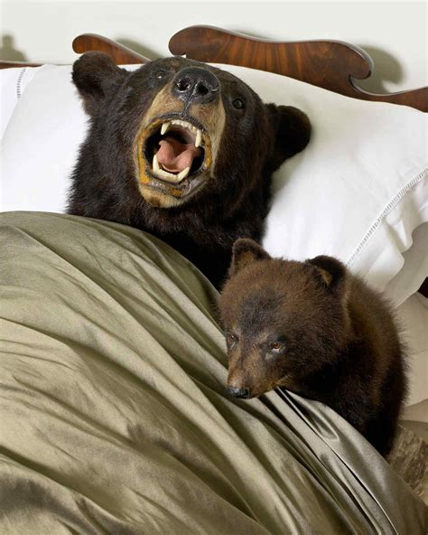 bear bed from my home to yours taxidermy martha stewart