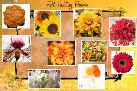 fall flowers in season fall flowers in season www imgkid com the image kid