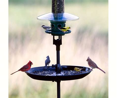 brome seed buster bird seed tray and catcher best price
