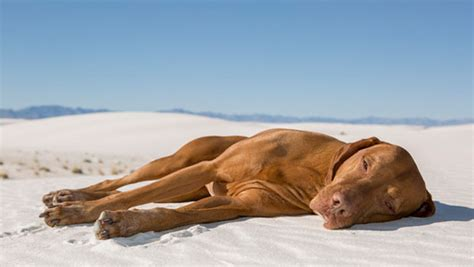 dehydration in dogs preventing dehydration in dogs