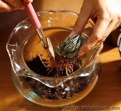Sedotan Steril Warna Warni cara membuat terarium
