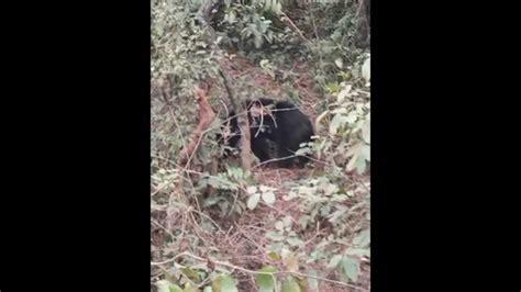 hidden cam video hidden cam has caught at jungle youtube