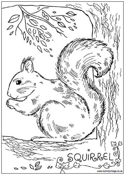 realistic squirrel coloring page squirrel colouring page