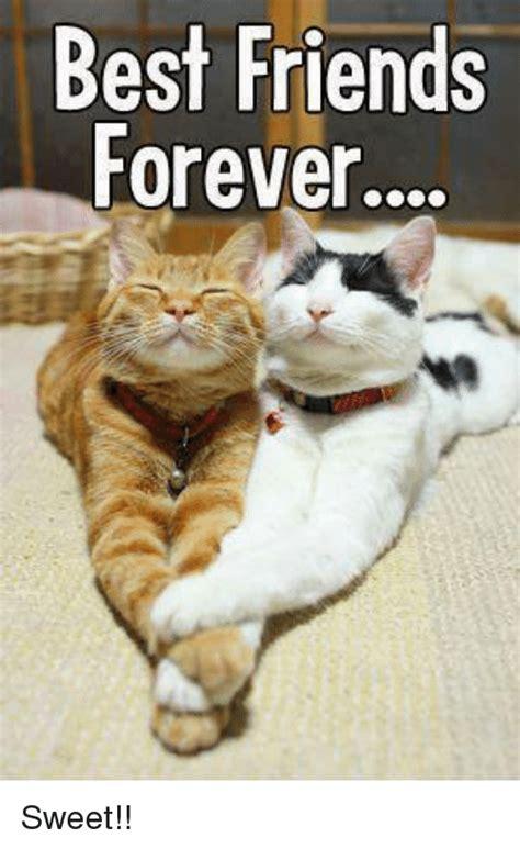 Kaos Best Friend Forever best friends forever sweet friends meme on me me