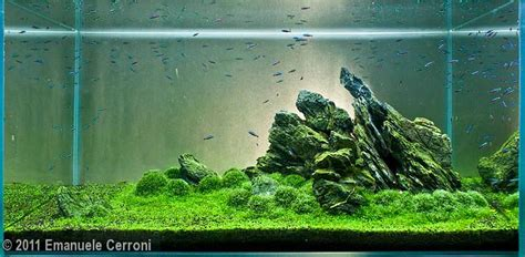 aquascape rule of thirds planted tank designed with the rule of thirds