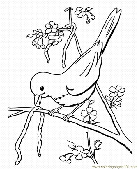 coloring pages spring animals spring animals coloring pages az coloring pages
