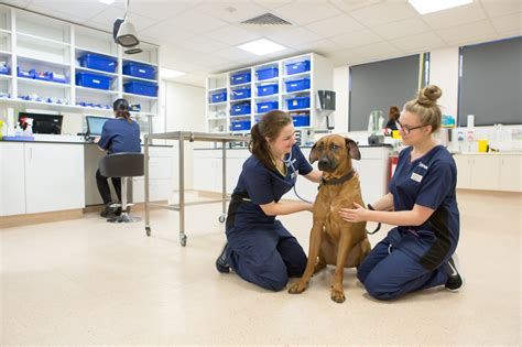 emergency vet vets now trusted out of hours pet emergency care in the uk